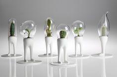 Kişiye Özel Çiçek:Domsai