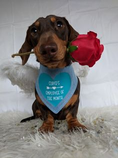 Roses are red.. my bandana is blue.. I'm an angel and i love you ♥️♥️♥️