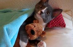 kitty hugging his teddy bear
