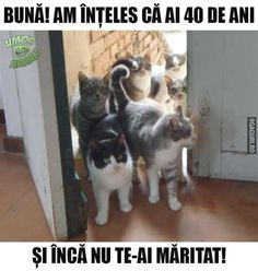 Find very good Jokes, Memes and Quotes on our site. Keep calm and have fun. Funny Pictures, Videos, Jokes & new flash games every day. Animals And Pets, Funny Animals, Cute Animals, Funny Dog Captions, Funny Cats, I Love Cats, Crazy Cats, Funny Images, Funny Pictures