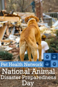 How to Make a Pet Disaster Kit from the Pet Health Network