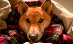 6 Ways to Keep Your Dog Active Indoors During Winter