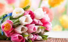 белые, букет, тюльпаны, цветы, розовые