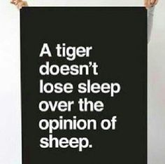 Haters quote rawr | Quotes | Pinterest