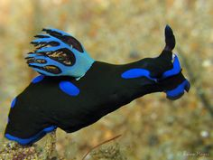 Animals Of The World, Animals And Pets, Cute Animals, Ocean Creatures, Fantasy Creatures, Beautiful Creatures, Animals Beautiful, Sea Slug, Underwater Life