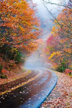 Blue Ridge Parkway (near Asheville, North Carolina) by Dennis