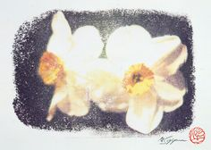 Flower of Narcissus where my signature and the stamp were in