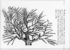 """Tree of library classifications"" from the Library of Congress Prints and Photographs Online Catalog. Library Classification, Book Care, Scientific Drawing, Nature Illustrations, Stippling Art, Visual Dictionary, Information Literacy, Library Science, Library Images"