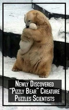 David Kuptana Stumbled Upon A Strange Animal And You'll Never Guess What It's Called Exotic Animals, Exotic Pets, Pooh Bear, Polar Bears, Adorable Animals, Bats, Sorting, Pet Birds, Funny Dogs