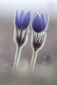Flowerz A'Bloomin'
