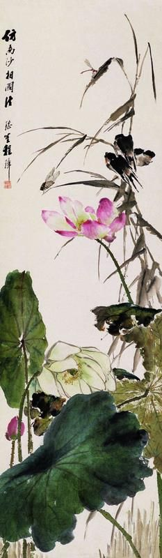 114 Best Lotus Flowers Images