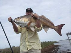 Louisiana redfish caught Fly Fishing