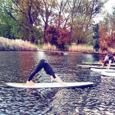 Who's keen to get down[ward dog] to Lake Burley G for a SUP yoga sesh tomorrow with me and @suping_caveman? If today's weather is tempting, tomorrow is predicted to be even better 🌞 places still available, book online at www.jogayoga.com.au boards included! #punintended Todays Weather, Sup Yoga, Books Online, Boards, Places, Dogs, Planks, Pet Dogs, Doggies