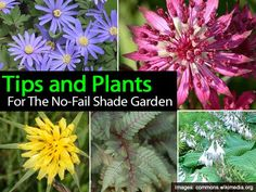 Tips and Plants For The No-Fail Shade Garden