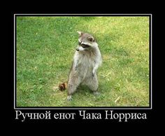 И сменою радостей жизнь хороша.@ Енот http://to-name.ru/astrolog/animals-horoscope/enot.htm