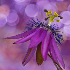 Passion Bokeh by njk1951 on Flickr..