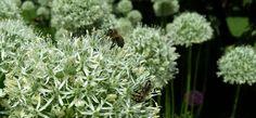 #Bienen und #Blumen
