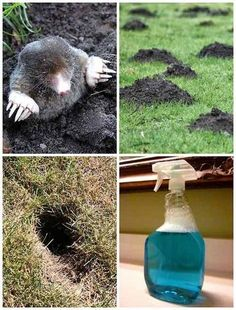 How To Get Rid Of Any Burrowing Animals With This Dawn Soap Solution I have enough trouble walking on my own two feet without holes under them. Seriously, gravity is a cruel mistress, but divots and holes in my yard definitely do not help. Ankles are sens