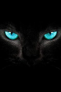 Ahhh -> Black Cats With Green Eyes Wallpaper Tier Wallpaper, Cat Wallpaper, Animal Wallpaper, Wallpaper Ideas, Iphone Wallpaper, Beautiful Cats, Animals Beautiful, Cat Poems, Animals And Pets