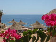 Hilton Sharks Bay Resort  Booking link: http://www3.hilton.com/en/hotels/egypt/hilton-sharks-bay-resort-SSHSBHI/index.html?WT.mc_id=zCBWAAB0US1HH2OLS4Generic127BR841274