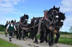 Traditioneller Leonhardiritt in Holzhausen im Rupertiwinkel - Berchtesgadener Land Blog