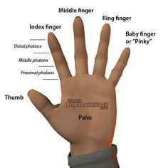 Each finger has a distinct name. find out the regular AND Latin finger names. English Writing Skills, English Lessons, English Vocabulary, Learn English, Food Vocabulary, Names Of Fingers, Dementia Quotes, Middle Finger Ring, Latin Words