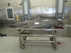 Death of Dolphin Shot With Arrow Sparks NOAA Hunt for Killer - A dolphin was killed with a hunting arrow in the northern Gulf of Mexico, the second violent death of the protected animal in recent weeks, federal authorities said Monday.
