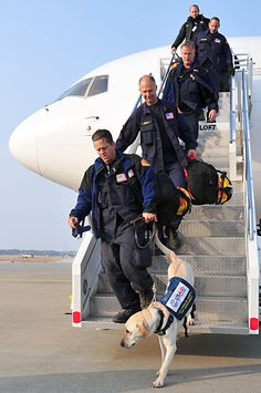 United States Agency for International Development search and rescue dogs along with their handlers arrived at Misawa Air Base, Japan (above). Air Force photo by Staff Sgt. Search And Rescue Training, Search And Rescue Dogs, Dog Training, Military Working Dogs, Military Dogs, Police Dogs, Cute Puppy Photos, Psychiatric Service Dog, War Dogs