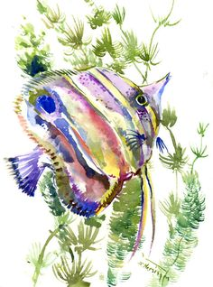 Copperhead Angelfish, 12 X 9 in, original watercolor painting, angelfish coral…
