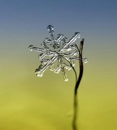 Macro Photographs of Snow Crystals & Snowflakes