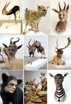 Animals with Human Faces by Kate Clark