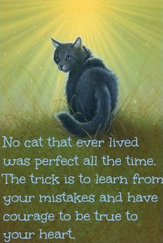 No cat that every lived was perfect all the time. The trick is to learn from your mistakes and have courage to be true to your heart.
