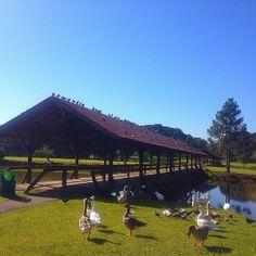O Parque Tingüi é um dos principais parques de Curitiba (PR). Para o lazer dos visitantes, existem uma ciclovia e uma pista de corrida paralelamente ao rio, com canchas de esporte e churrasqueiras. Foto: @machapelin