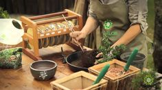 bonsai, how to cultivate
