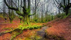 Hayal gücünüzü harekete geçirecek 10 masalsı orman - Foto 17 - Stargazete Foto Galeri