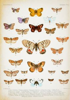Vintage Butterflies  Art Print from society 6