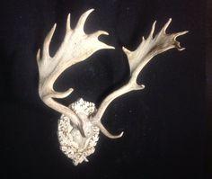 Naturally sun bleached fallow deer on old world white oak leaf & acorn panel