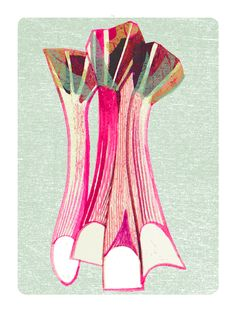 April small rhubarb illustration for Gardens Illustrated Magazine