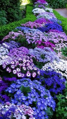 10 Low-Maintenance Perennials 2019 10 low-maintenance perennials for the busy gardener! You can still have beautiful flower beds without spending a lot of time maintaining them. The post 10 Low-Maintenance Perennials 2019 appeared first on Landscape Diy. Shade Garden, Garden Plants, Purple Garden, Violet Garden, Planter Garden, Vegetable Garden, The Secret Garden, Plantation, Dream Garden
