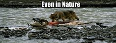 Even in nature...  #ncstate #wolfpack #gotohellcarolina