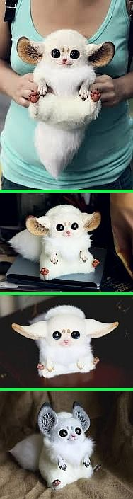 "Fake - Inari Foxes - These are dolls. They are not real. - There is no such species of animal. The first soft-bodied framed doll from the new series ""Inari Foxes"" by Sanani.. There are about 8.5 inches tall and made of fabric fur + fimo clay parts...."