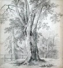 Image result for pencil drawing tree trunk