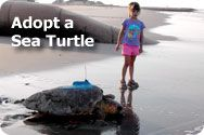 Can adopt a sea turle (shark, eagle, etc) . The sea turtle is tagged and you can track it on its journey. Could be fun to do with the class.  Eagles for first grade?