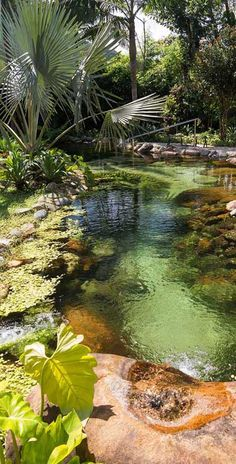 42 awesome natural small pools design ideas for the private awesome natural small pools design ideas for the private gardenNatural pool Natural pool Natural pool family natural swimming pools that you want to Koi Pond Design, Small Pool Design, Landscape Design, Pond Landscaping, Ponds Backyard, Sloped Backyard, Design Fonte, Fish Pool, Natural Swimming Pools