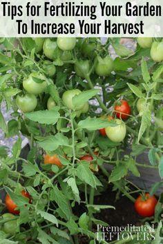 Tips for Fertilizing