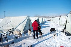 An asylum seeker from Pakistan feeds a stray dog at the snow-covered refugee camp of Vagiohori village, outside Thessaloniki Jan. 12, 2017. (AP/Giannis Papanikos)