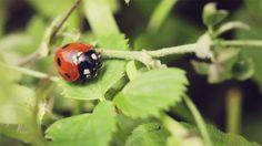 cinemagraph animated #ladybug #gif