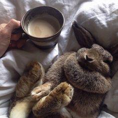 Smooshy Sundays.  #founditontumblr #sundaymood #veganbrighton #snuggles #coffee