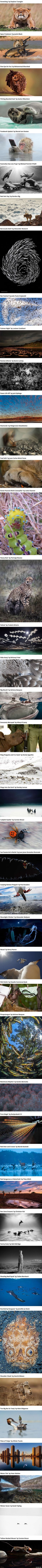Finalists Of The 2014 Wildlife Photographer Of The Year Competition Will Leave You Wanting More - 9GAG