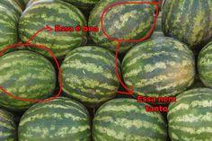 14 dicas para não errar ao escolher vegetais na feira ou mercado novamente